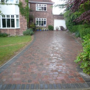 Alpha Setts in Brindle After